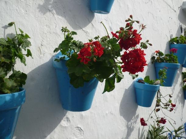 Mijas flowers